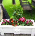 Istutus_laatikko_kukkia